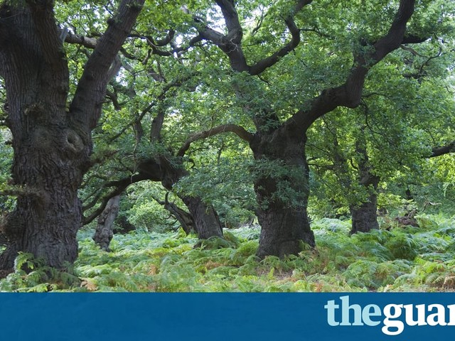 Humans are losing touch with nature – it's a tragedy with no quick fix | Deborah Orr