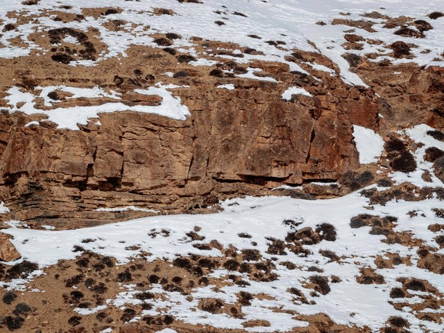 Can you see the snow leopard prowling over this ice-covered mountainside?