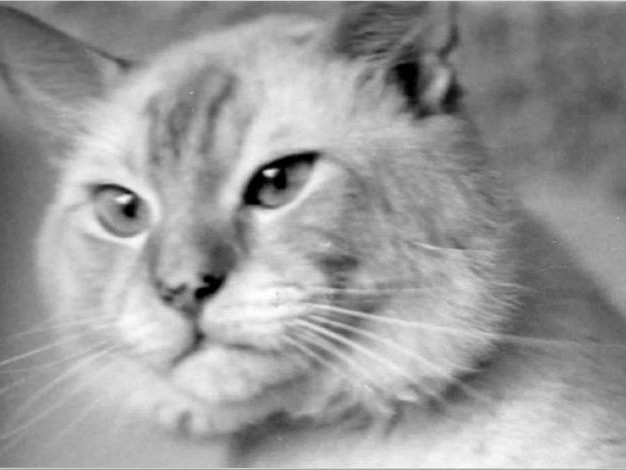 Memories of Feline Friends ~ Bozo Was the Perfect Name, Part 2