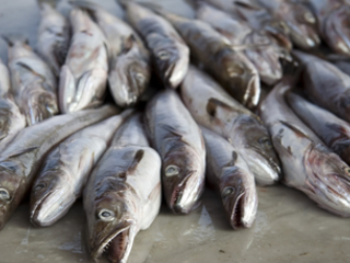 Caught out? UK supermarkets accused of 'turning blind eye' to unsustainable fish feed