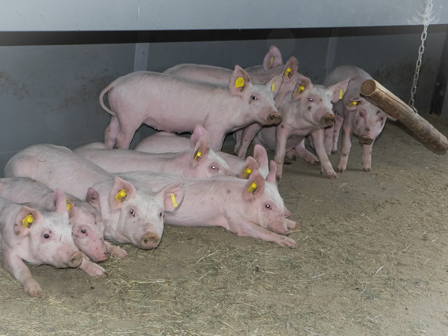 Earth-air heat exchanger best way to protect farm animals in livestock buildings against the effects of climate change