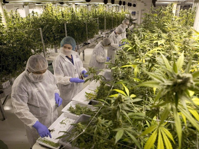 B.C. sets minimum age of 19 to consume marijuana, plans mix of retail sales