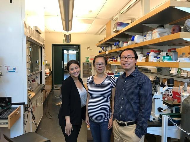 Biosensors light up cellular signaling processes