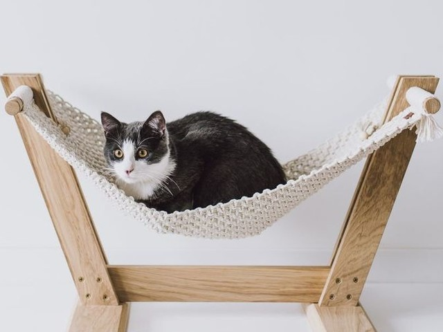 54 Cat Lover Gifts - From Hanging Macrame Cat Beds to Feline Photography Accessories (TrendHunter.com)