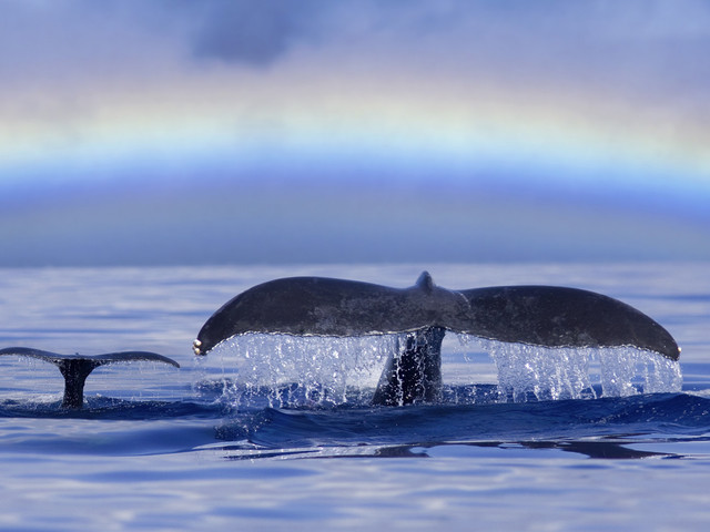 Travel Eye: The Unforgettable Magic Of Whale Watching In Alaska