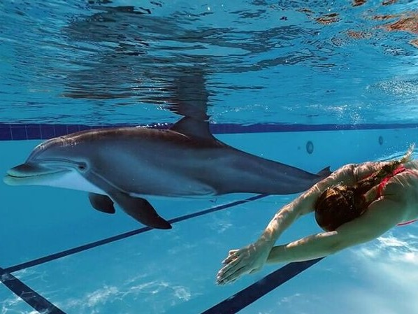 Swimming Dolphin Robots - Edge Innovations' Realistic Dolphin May Replace Cetaceans in Captivity (TrendHunter.com)