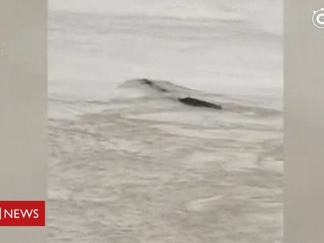 China gripped after sighting of its own 'Loch Ness Monster'