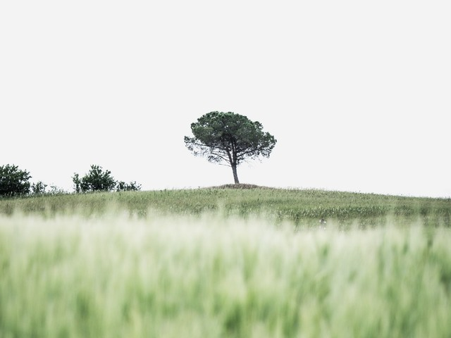 Devote Yourself to Faithfulness: How to Cultivate a Quiet Virtue