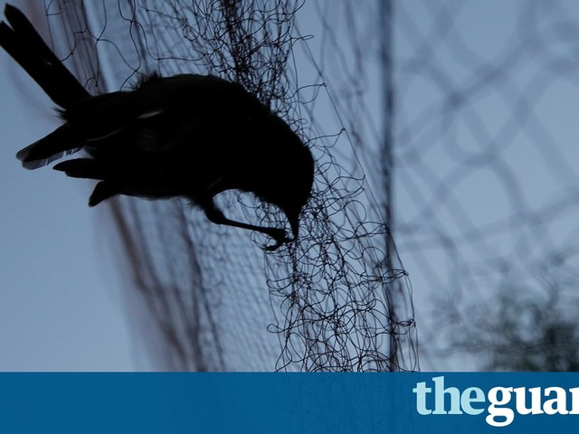 'Looting' spree threatens wildlife and forests across eastern Europe