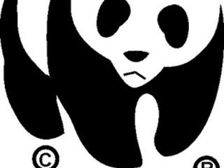Spotlight: WWF's Celebrity Supporters