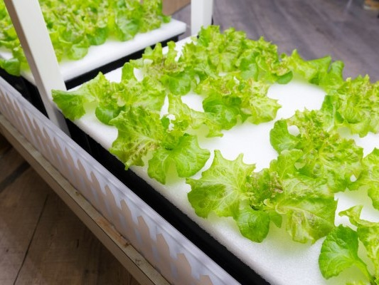 Hydroponic farming startup Just Vertical cultivates growth at home