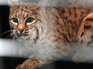 Trappers ask court to throw out lawsuit over US fur exports