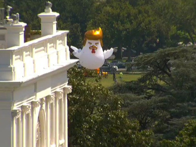 Giant inflatable chicken with Trump's hairdo lands near White House