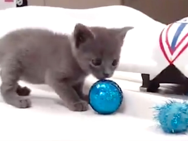 Winter Olympics For Rescue Kittens And Puppies Will Melt The Coldest Of Hearts
