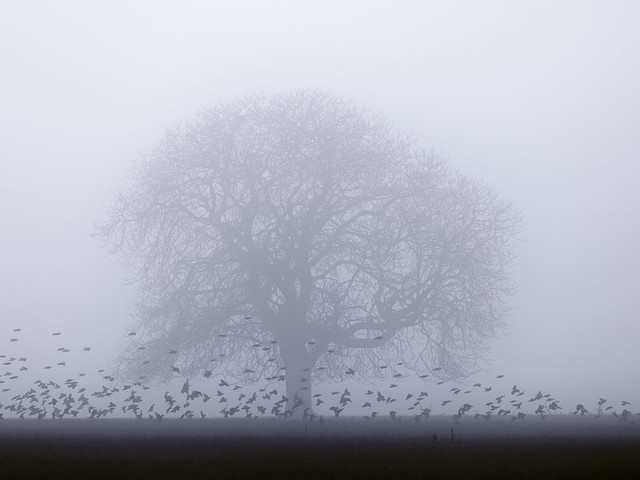 Here's The Christmas Day Weather Forecast (Fog Is Festive, Right?)