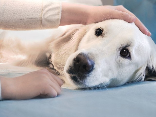 Call to vaccinate your dog as cases of potentially fatal illness rise