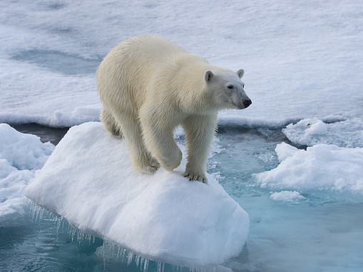 High-tech carpets inspired by polar bear fur could lead to new sticky and insulating surfaces