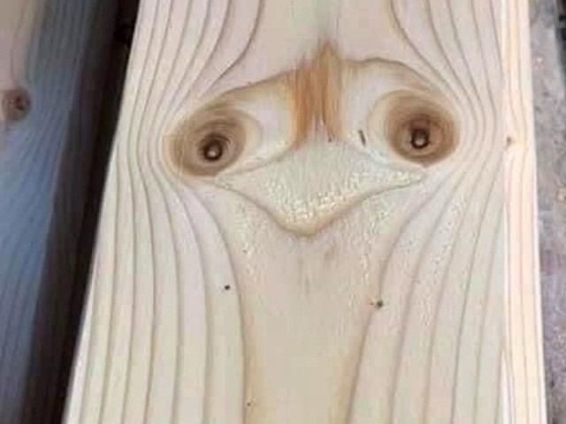 Man claims to have found an ostrich in his new skirting board