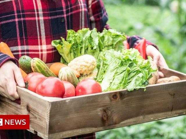 Seasonal worker scheme could tackle food labour problem