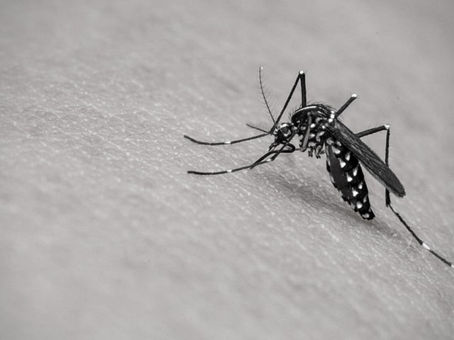 Taking the fight to dengue at epihack Sri Lanka