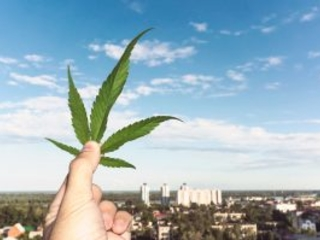 Marijuana Bigwigs Canopy, Aurora, Tilray, and Cronos Stock Forecasts Boost Higher Post Legalization Date