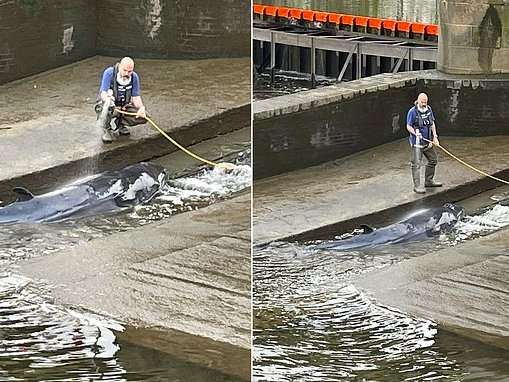 Whale is found stranded in the Thames