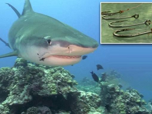 New study shows millions of sharks have fishhooks stuck in their bodies for up to seven years