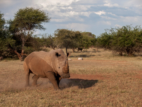 S. Africa's first online rhino horn auction sparks anger