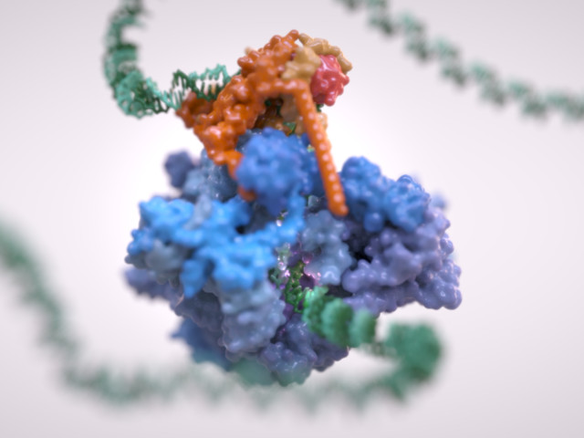 Scientists Watch DNA Being Read In World First