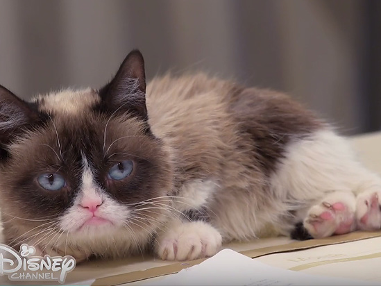 Grumpy Cat, Viral Internet Sensation, Dies at 7