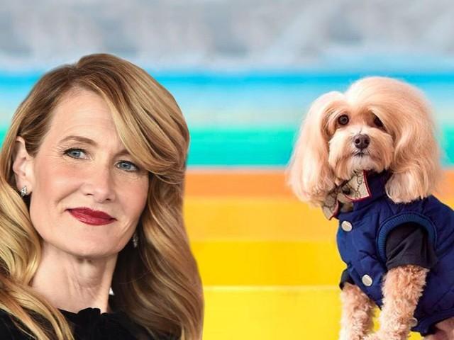 Laura Dern confirms this dog looks a lot like Laura Dern