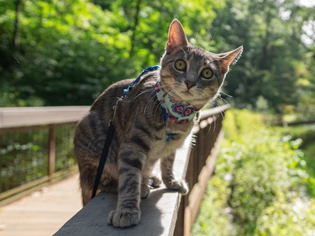 The 5 best cat harnesses to take your cat on outdoor adventures