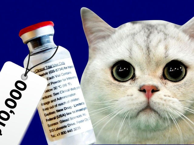 People are paying as much as $10,000 for an unlicensed remdesivir variant for their cats, in a thriving black market linked to Facebook groups