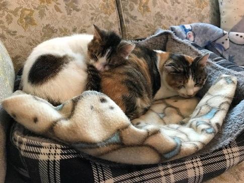 Guest Star Cat: Mimi and Oscar