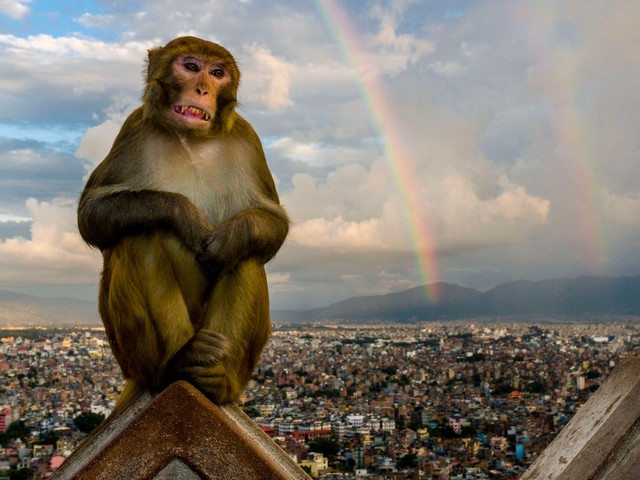 Animal photos show how different species are adapting to city life