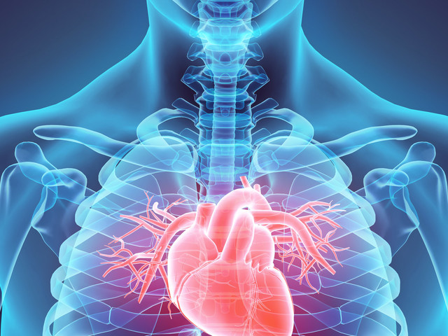 Scientists Have Worked Out How To Save A 'Dead' Heart After A Heart Attack
