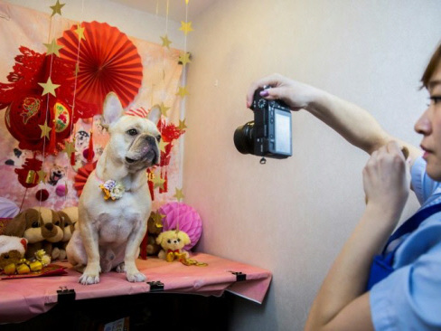 Milk spas and manicures: A Hong Kong dog's life