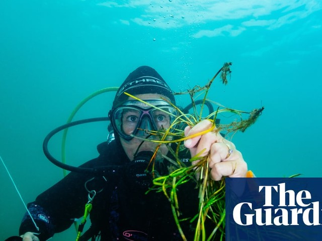 The UK's biggest seagrass restoration scheme – in pictures