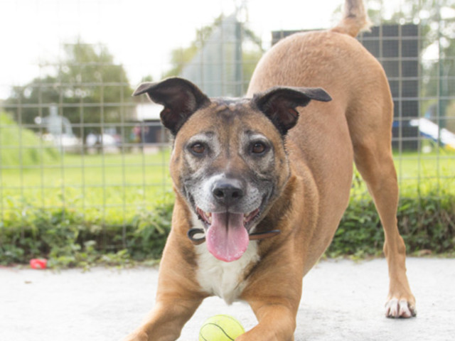 Pet of the Week with Danaher Animal Centre