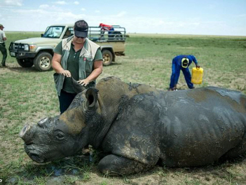 South Africa online rhino horn auction delayed by two days