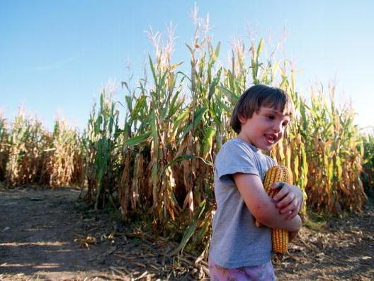 Ready for a Maize Maze? Halloween Corn Mazes Near Me