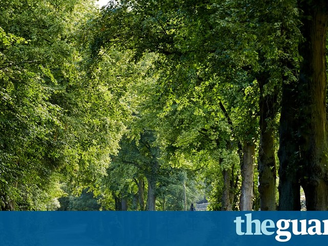 Councils must put tree safety first | Letters
