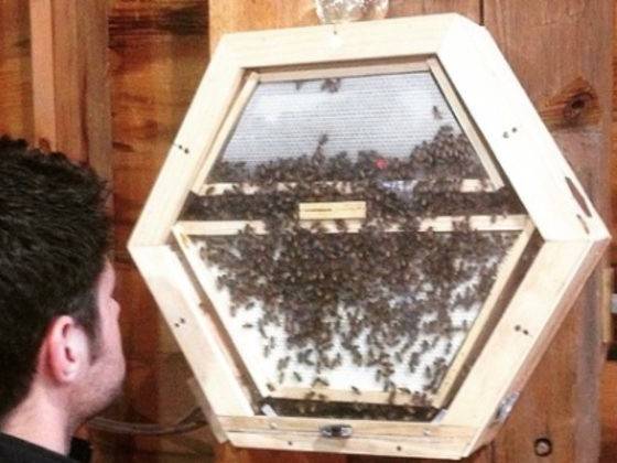 Company Tackles Tricky Ecosystem Problem By Putting Bees In People's Living Rooms