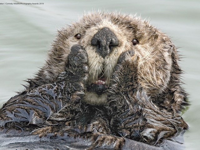 40 hilarious images from the Comedy Wildlife Photo Awards 2019