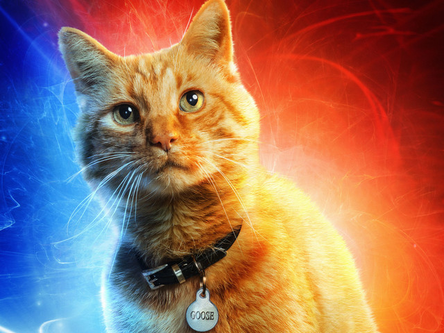 'Captain Marvel' Directors Explain Why They Changed the Cat's Name