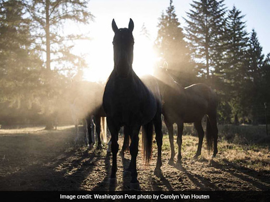 A Horse Was Neglected By Its Owner. Now The Horse Is Suing.