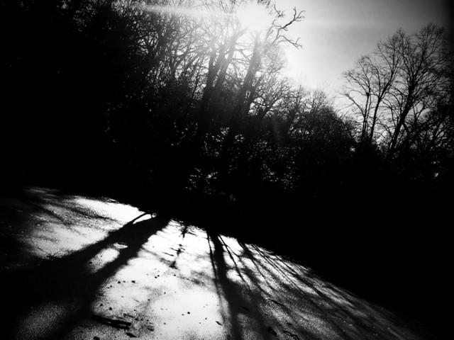Listen To This! Suzie Stapleton Premieres New Single, Thylacine