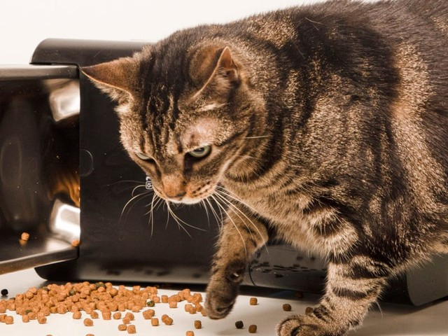The Amazon-backed startup that made my $150 'smart' pet feeder went out of business — How my hungry cat became the canary in the Internet of Things coalmine