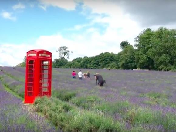 Video: London's Lavender Fields