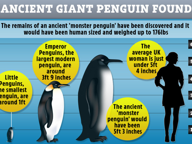 Ancient 176lb 'monster penguin' the size of a HUMAN found – and only evolved thanks to dinosaur extinction